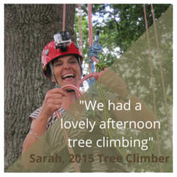 tree climbing review