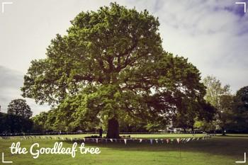 Pauls top trees Goodleaf