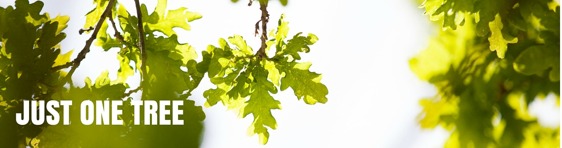 oak leaves and light Just one tree
