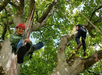 Tree Climbing at Rock Farm Slane