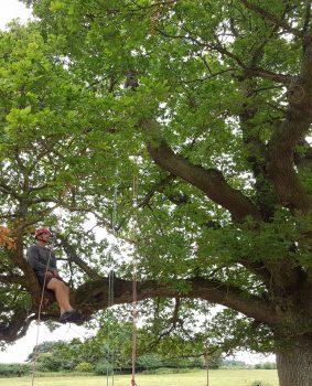 Man sat in tree, recreational tree climbing