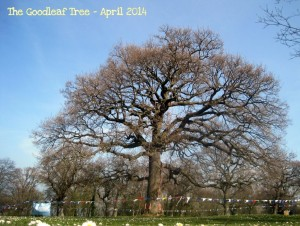 Tree climbing special offer