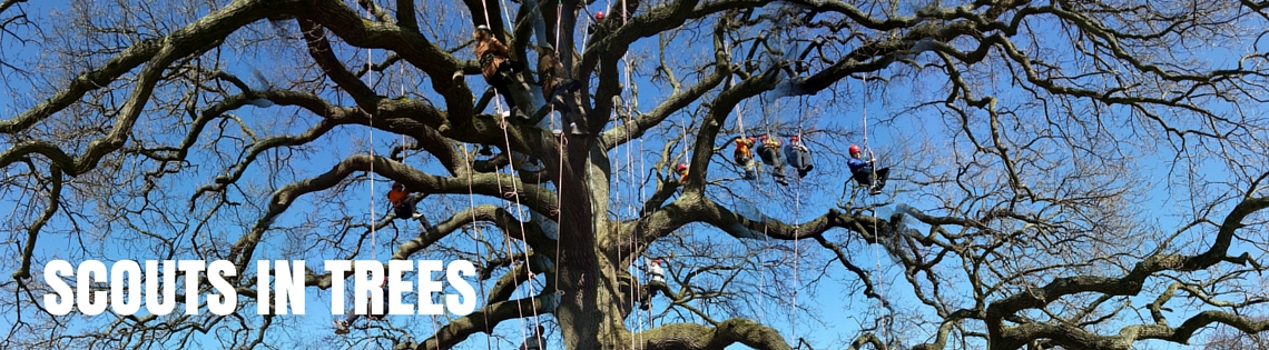 scouts climbing a tree with blue sky in background