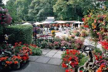 Rylstone Gardens- more offbeat Isle of Wight
