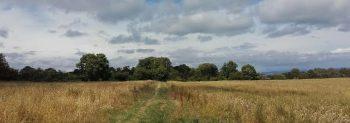 The Barnsley Trail, a beautiful Isle of Wight walk