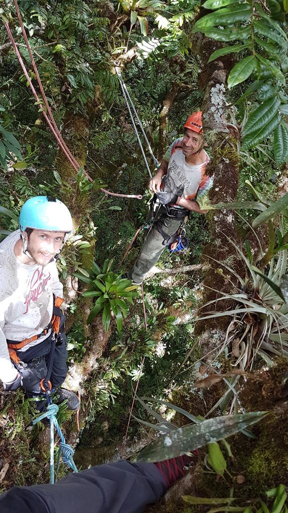 People tree climbing in Costa Rica