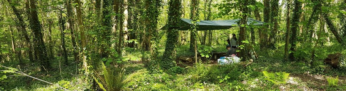 woodland with bushcraft activity