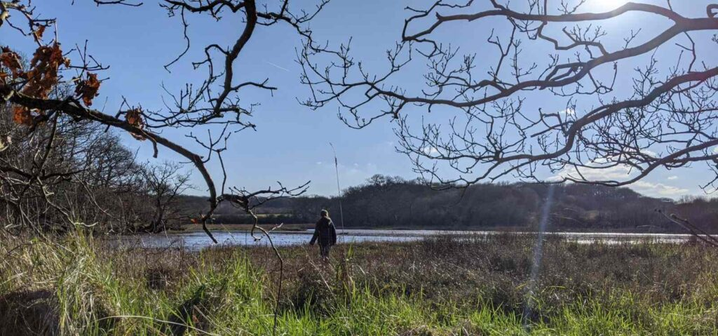 a child walks on the shore of a creek with bare branched trees