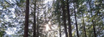 tree tops and light coming through